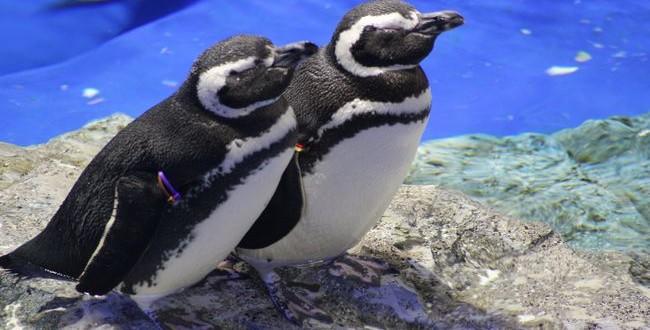 ペンギンすらカップルだというのにおまえらときたら